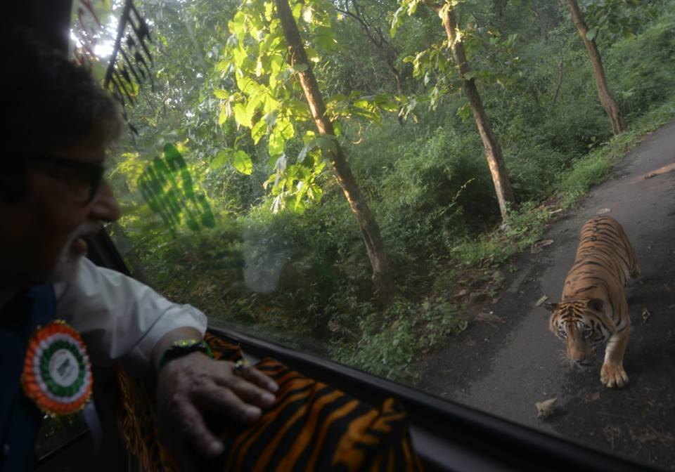 bigB with tiger3