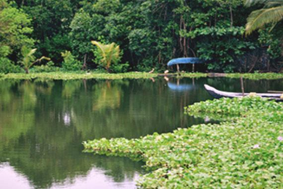 Haritha-Keralam-Mission